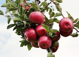 Jabłko 3
