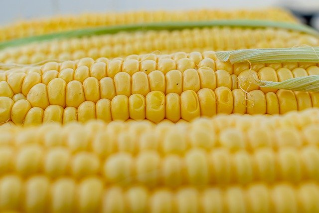 Jak ugotować kukurydzę 1