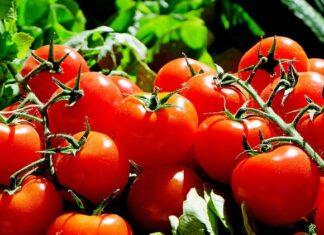 Pomidory 1
